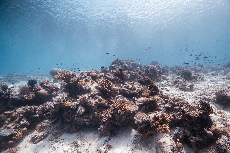an underwater view of coral reef and fish