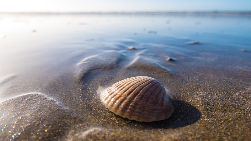 a seashell sitting in the sand