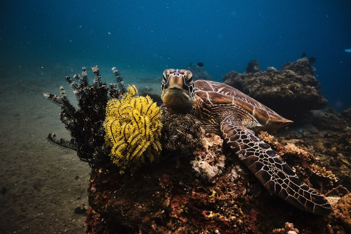 sea turtle perched on ocean rocks and plants