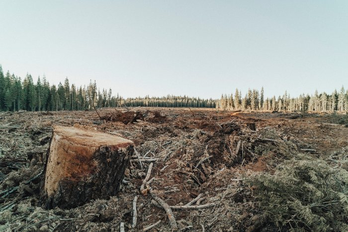 a clearing in a forest where trees have been chopped down