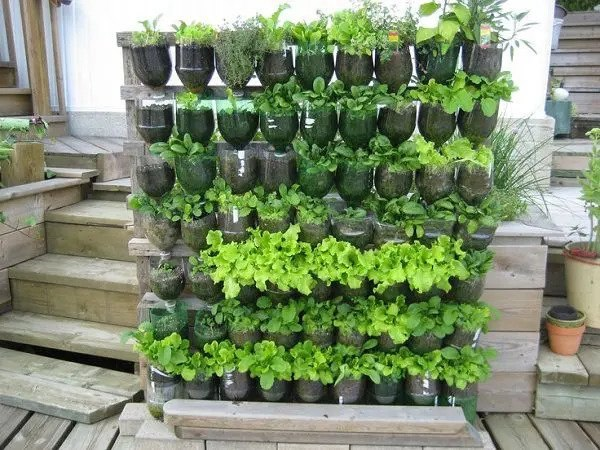 a vertical garden made of reused 2-liter plastic bottles